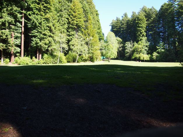 main gathering area at redwood park