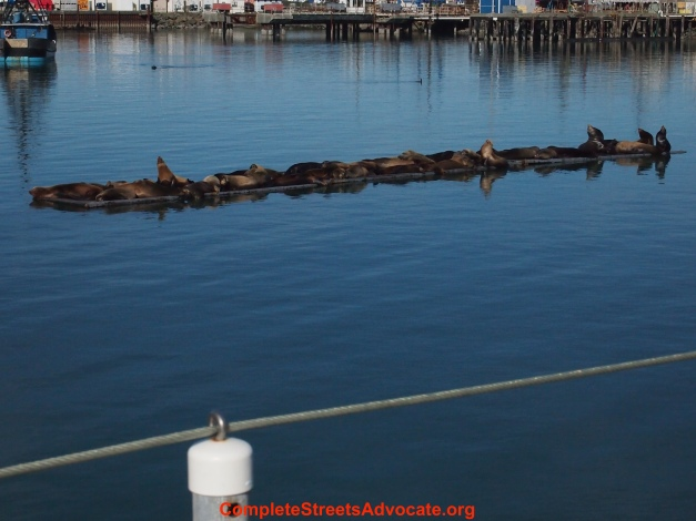 sea lions relaxing on water